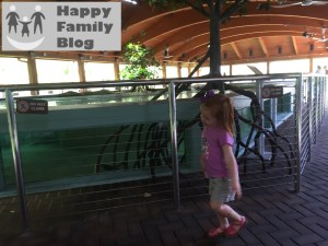 Gumbo Limbo by Happy Family Blog