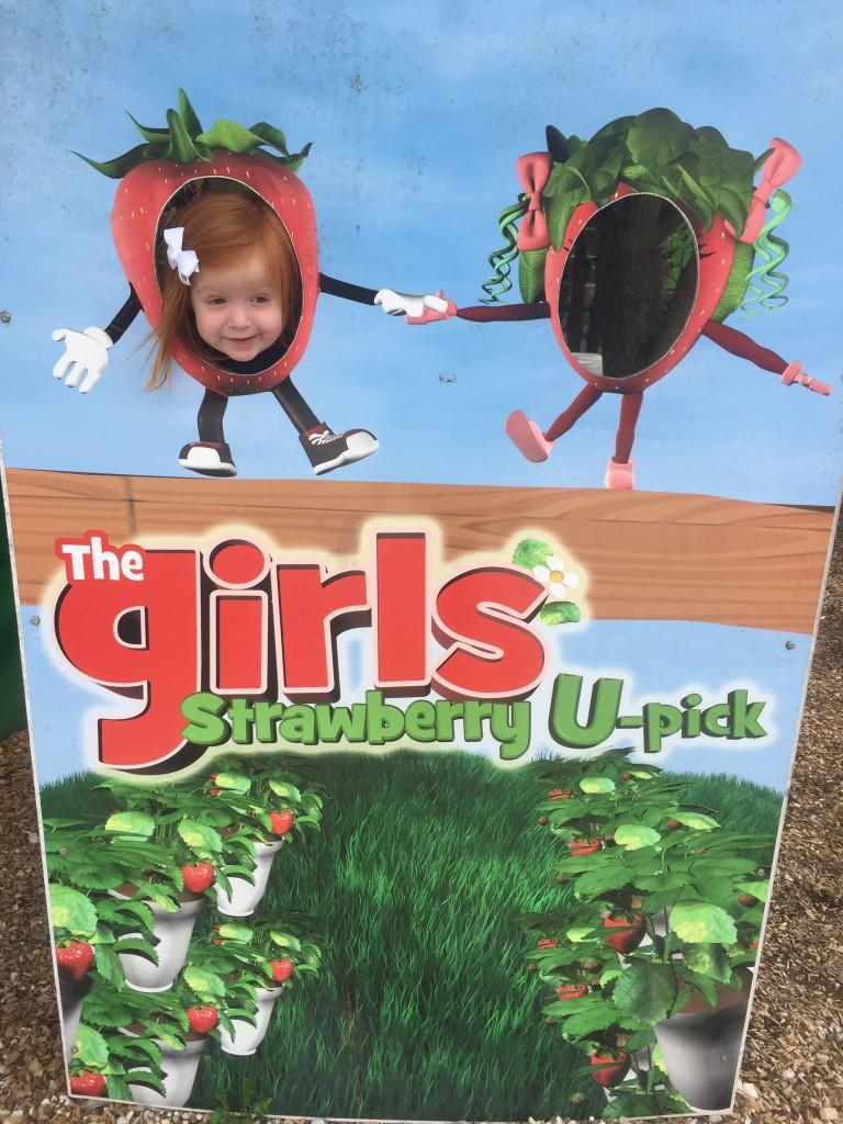 the girls strawberry patch, the girls strawberry, strawberry patch delray beach, The Girls Strawberry U-Pick