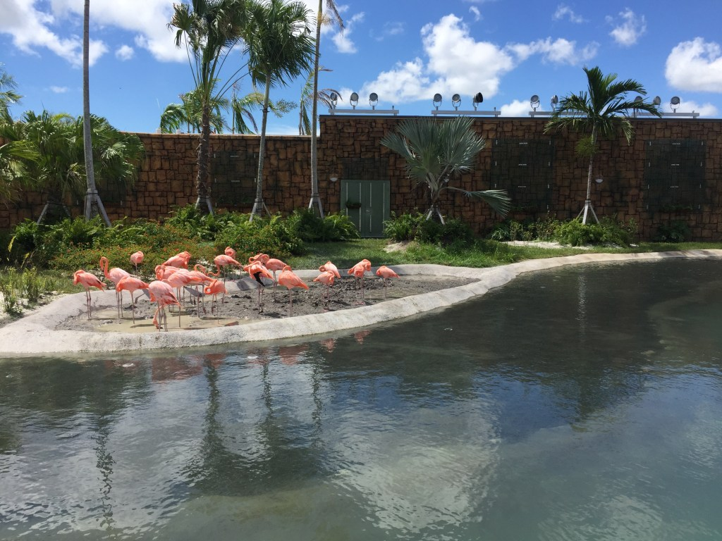 Miami Zoo, Miami Metro Zoo, Miami Zoo hours, Miami Zoo Price, Miami Zoo tickets, Miami Zoo Prices, Miami Zoo Map, zoo in Miami