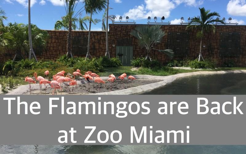 Flamingos are Back at Zoo Miami by Happy Family Blog