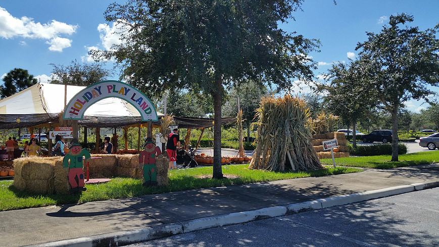 Favorite Pumpkin Patches in South Florida, Best Pumpkin Patches in South Florida, Best Pumpkin Patches in Florida