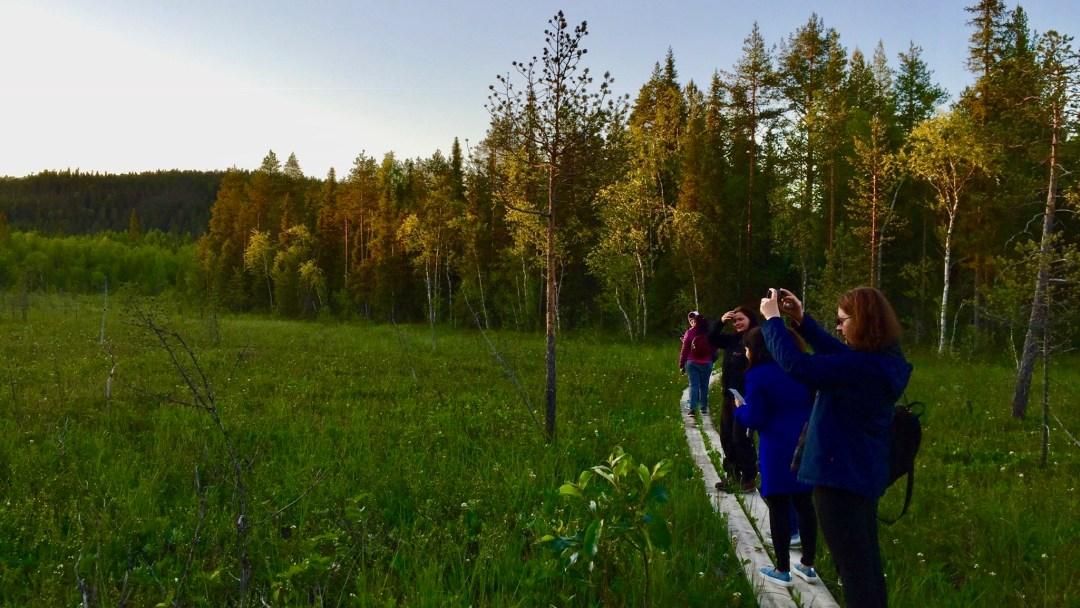 Happy-Fox-Arctic-Nighless-Night-Trip-forest-farm-midnight-sun-p