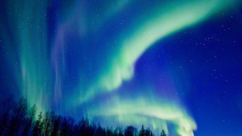 Happy-Fox-Aurora-Dinner-auroras-forest-farm-p