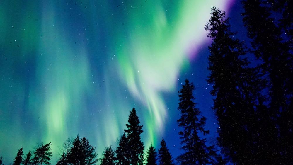 Happy-Fox-Aurora-Dinner-auroras-trees-p