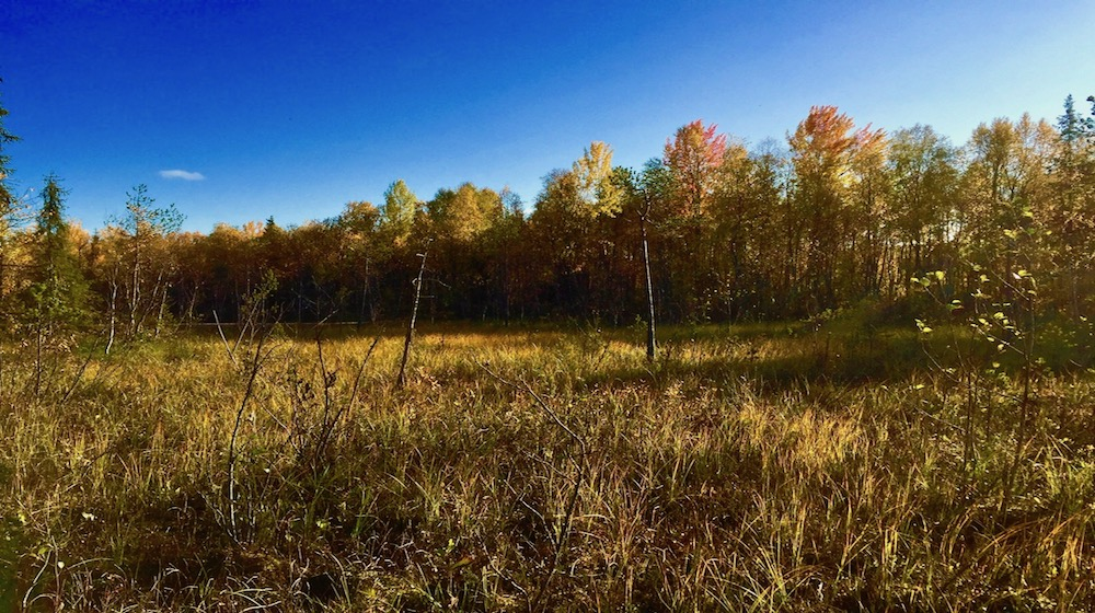 Happy-Fox-Fall-Colors-and-Landscapes-forest-farm-swamp-s