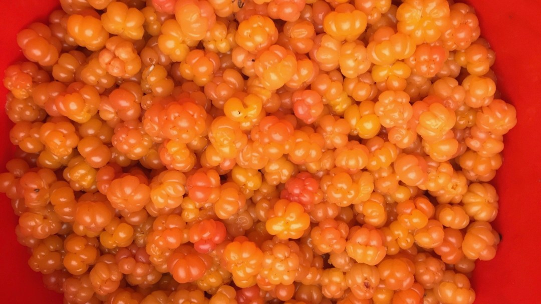 Happy-Fox-Goods-of-the-forest-cloud-berries-p