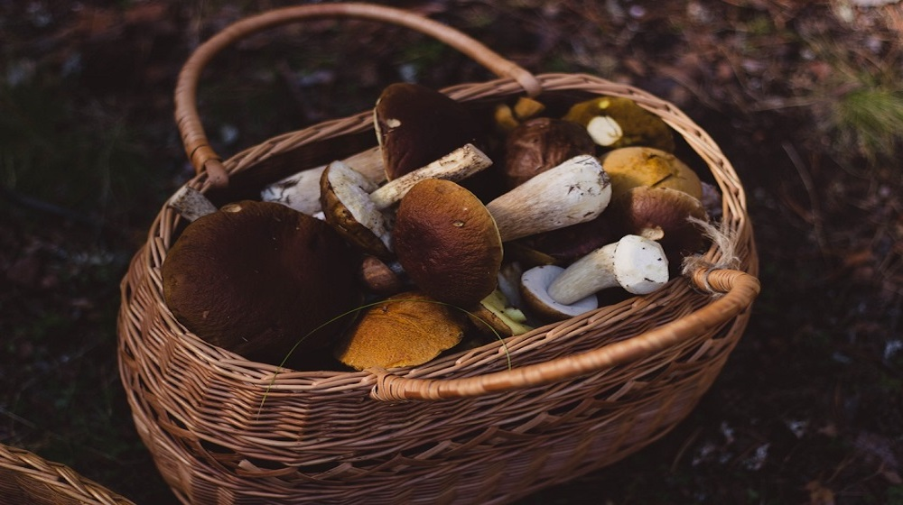 Happy-Fox-Magic-of-the-Forest-mushroom-basket