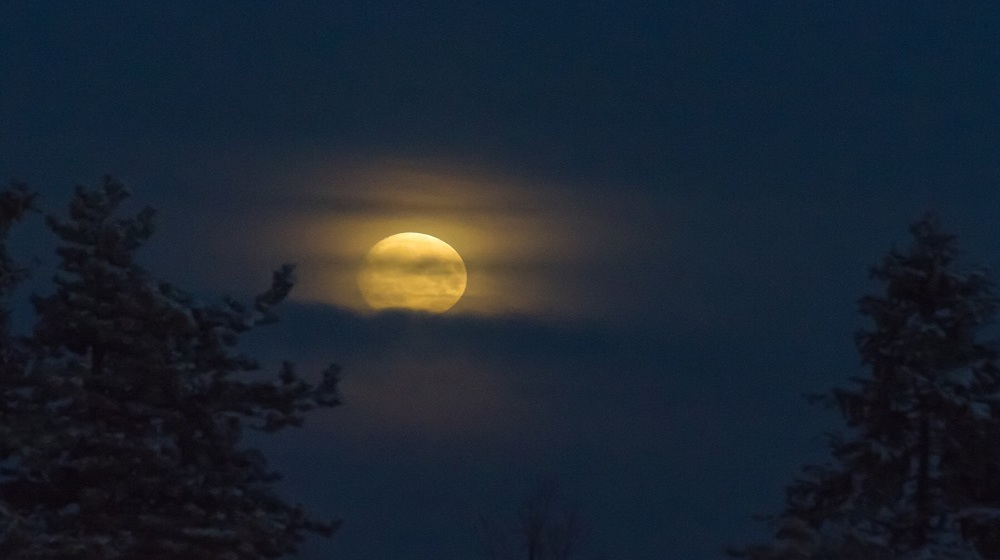 Happy-Fox-Northern-Lights-Hunt-in-hot-tube-and-a-log-sauna-winter-moon