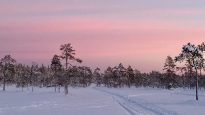 Happy-Fox-Winter-Forest-red-sunset-and-swamp kopio