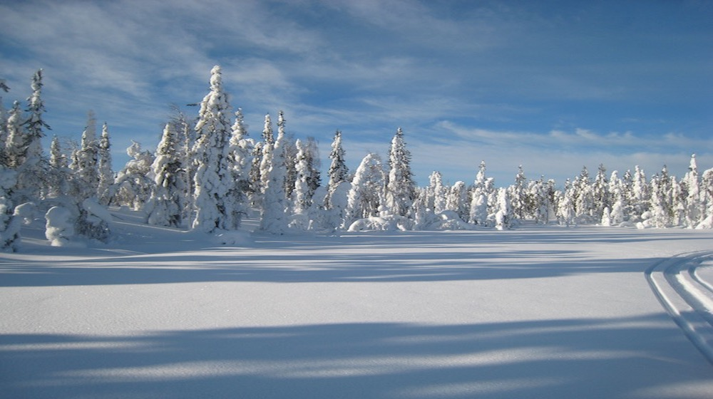 Happy-Fox-Winter-Forest-snowy-forest