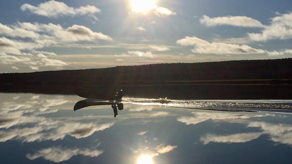 Happy-Fox-Arctic-Boat-Trip-to-the-Ounasjoki-River-and-kemijoki-River-golden-fox-on-ounasjoki-river