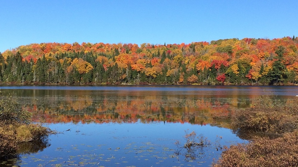 Happy-Fox-Fall-Colors-by-Canoe-fall-colors-forest-and-river