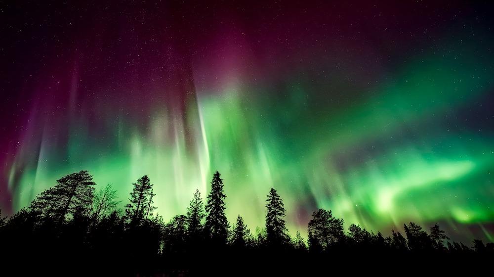 Happy-Fox-aurora-adventure-by-open-fire-aurora-on-trees