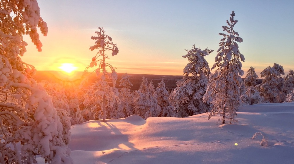 Happy-Fox-Forest-walk-&-Tradiotional-log-sauna-snow-forest-sunset kopio