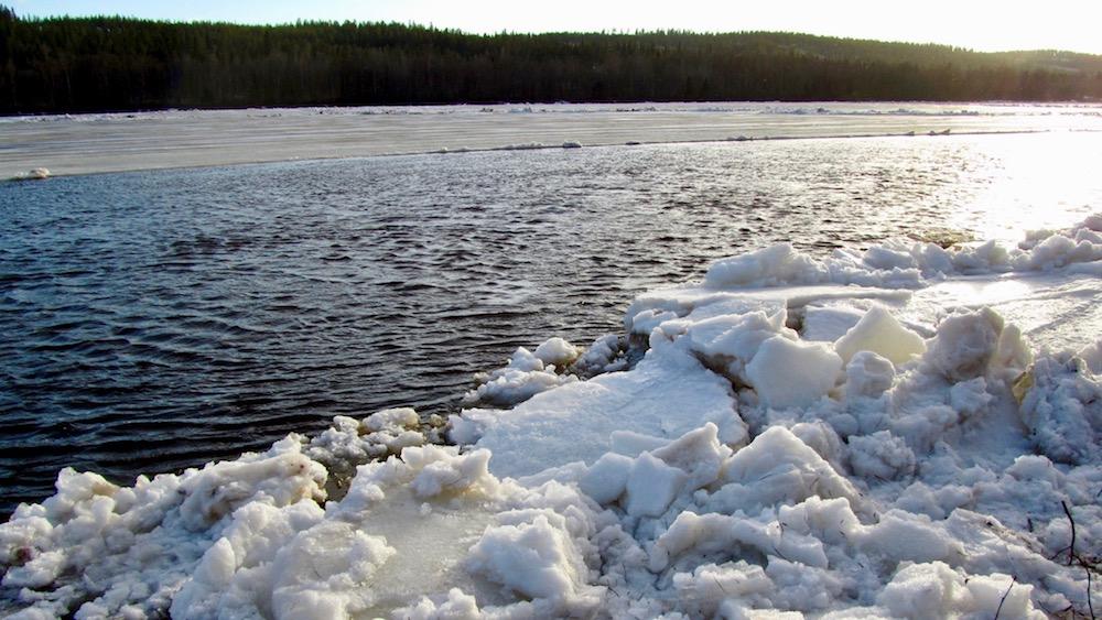 Happy-Fox-Arctic-Nature-Awakens-icerun-p