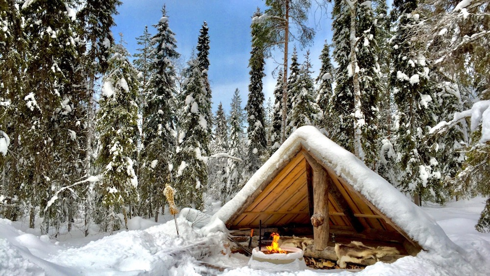 Happy-Fox-Arctic-Picnic-and-Forest-Walk-lean-to-p