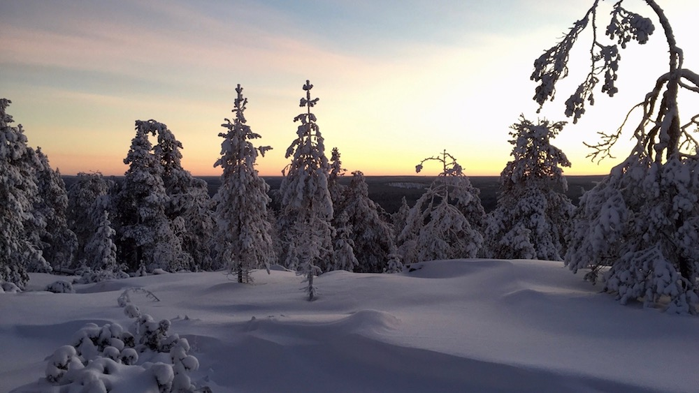 Happy-Fox-Arctic-Picnic-and-Forest-Walk-sunset-p