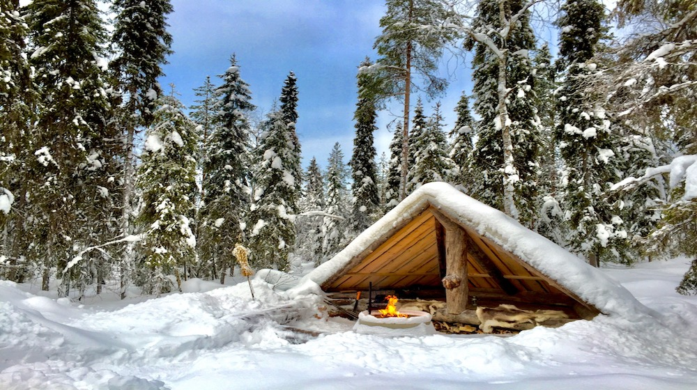 Arctic picnic and Forest Walk, 3 hours