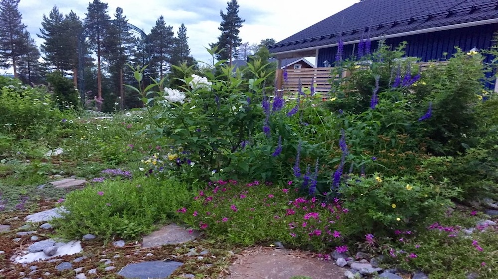 Happy-Fox-Barbegue-Finnish-home-garden-flowers