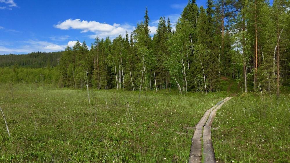 Happy-Fox-Finnish-Picnic-by-Open-Fire-duckboards-p