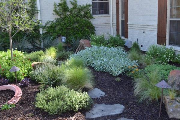 drought tolerant plants happy