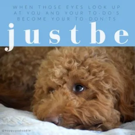 Photo of red goldendoodle dog looking up and feel-good word: just be