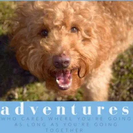 Photo of red goldendoodle dog and feel-good word about adventure