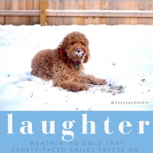 Red goldendoodle dog lying in snow with frost on face and smile quote