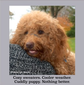 Close-up red goldendoodle dog snuggled on gray sweatered shoulder with autumn colors and original writing about fall and dogs by J. Carl