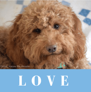 Red goldendoodle dog with word love in blue type and vintage quilt