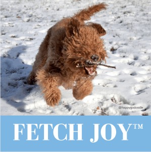 Red goldendoodle dog with stick in open mouth and running in snow
