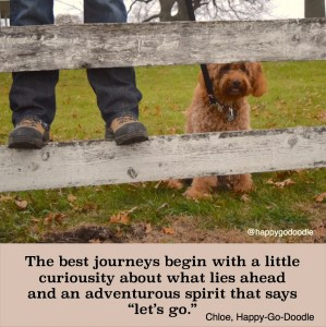 Red goldendoodle dog peeking through wooden fence with hiker's legs beside her and quote about adventure by Happy-Go-Doodle