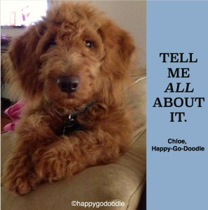 """Red goldendoodle pup with paw on couch with title """"tell me about it"""" and Happy-Go-Doodle"""