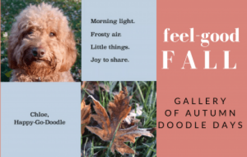 Goldendoodle, fall leave, and quote by happy-go-doodle about fall
