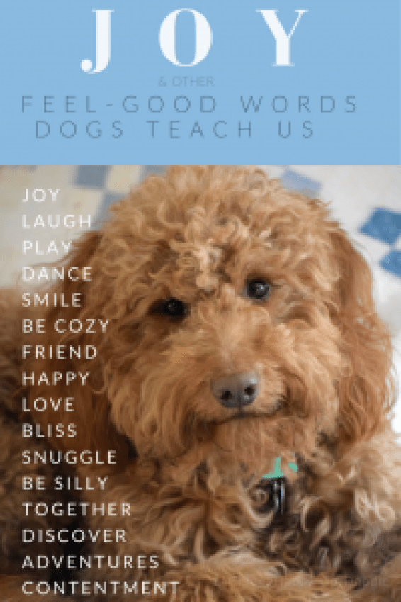 Friendly red goldendoodle dog with expressive, smiling face, joy and feel-good words dogs teach us