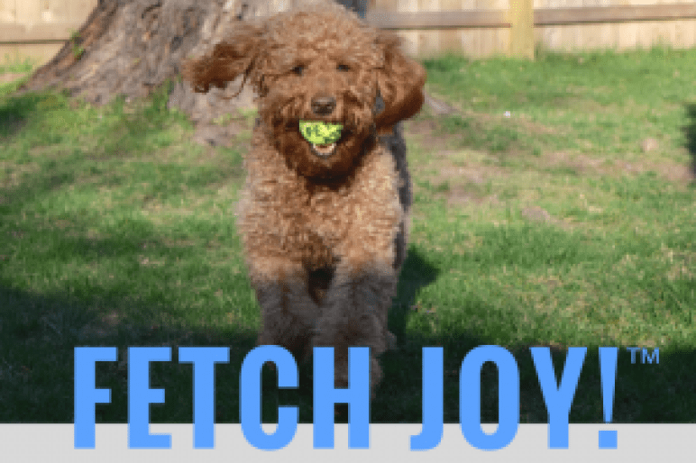 Red goldendoodle dog running with yellow tennis ball and blue type with word Happy-Go-Doodle sell line fetch joy™