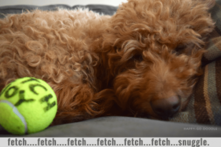 "Happy-Go-Doodle, a red goldendoodle, sleeping with yellow tennis ball with ""fetch joy™"" slogan and type fetch...fetch...fetch...snuggle."