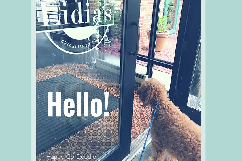 "Red goldendoodle dog looking into doorway of restaurant with text ""hello"""