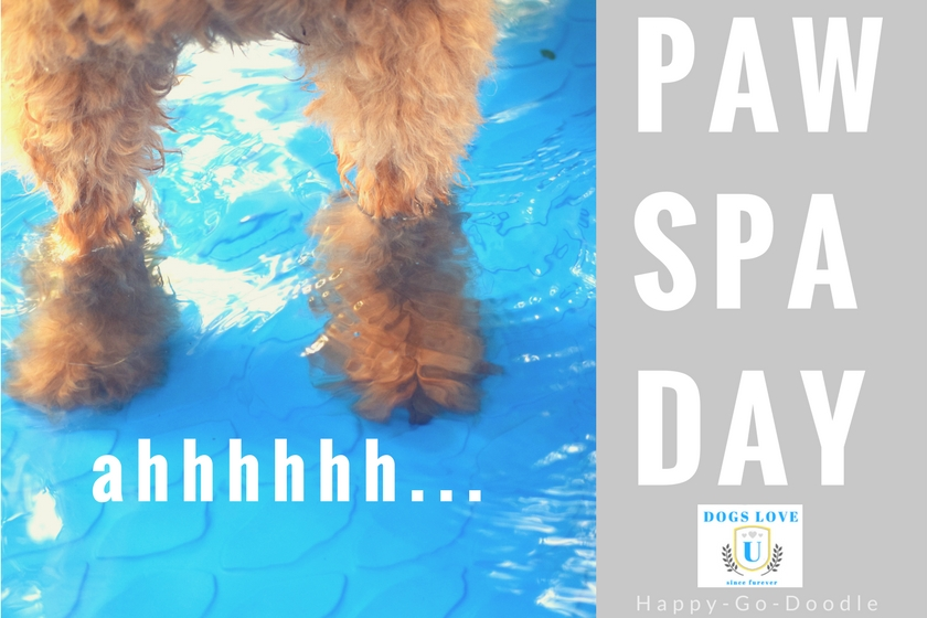 Ahhhh...there's nothing like a Paw Spa Day for your pooch. Red goldendoodle's paws in water with title paw spa day