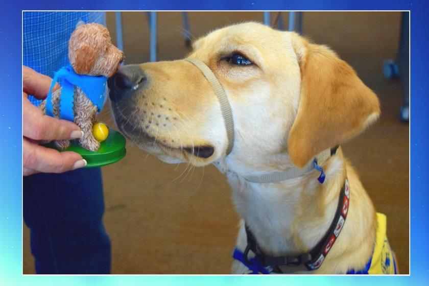 Dog gently sniffs a bobblehead of a goldendoodle dog