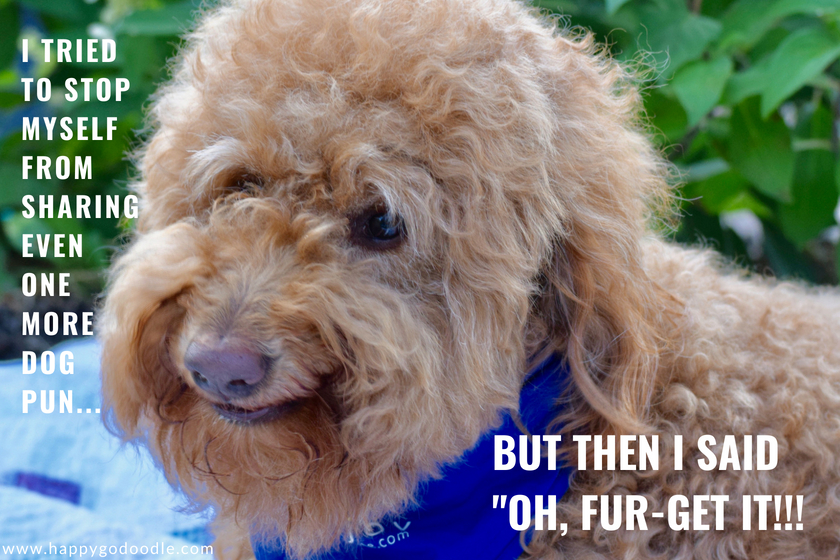 The Ultimutt List Of Dog Puns To Make You Smile Or Grrrroan