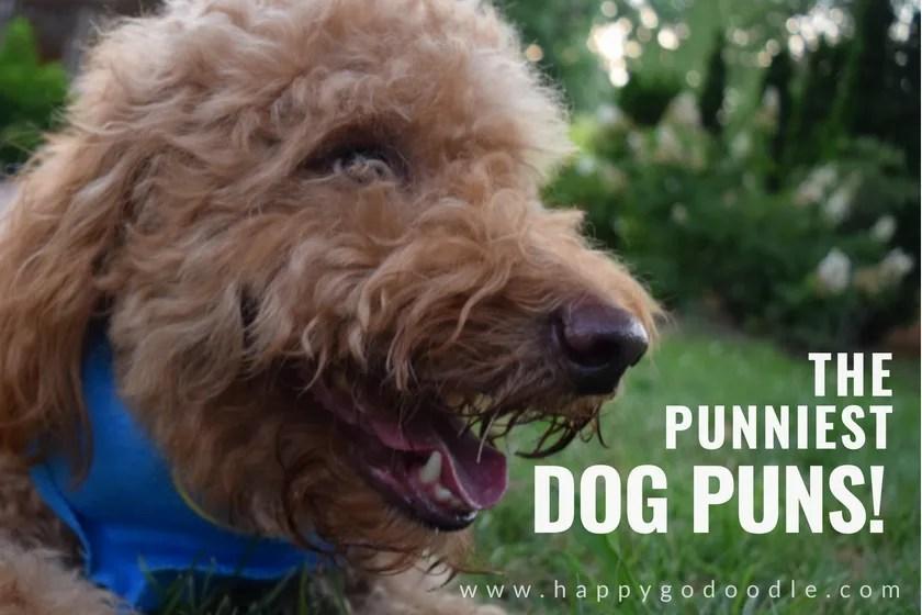 Dog dating puns