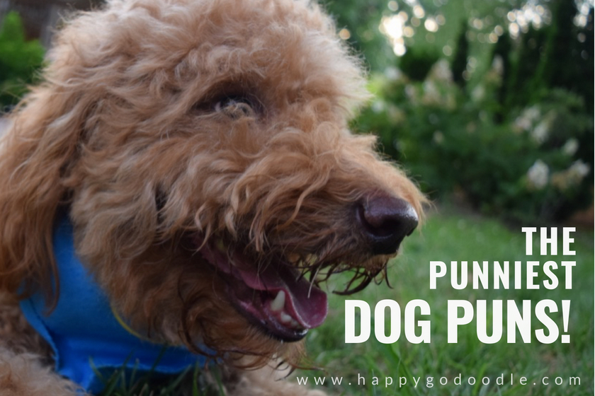 red goldendoodle dog with smiley face and title the punniest dog puns