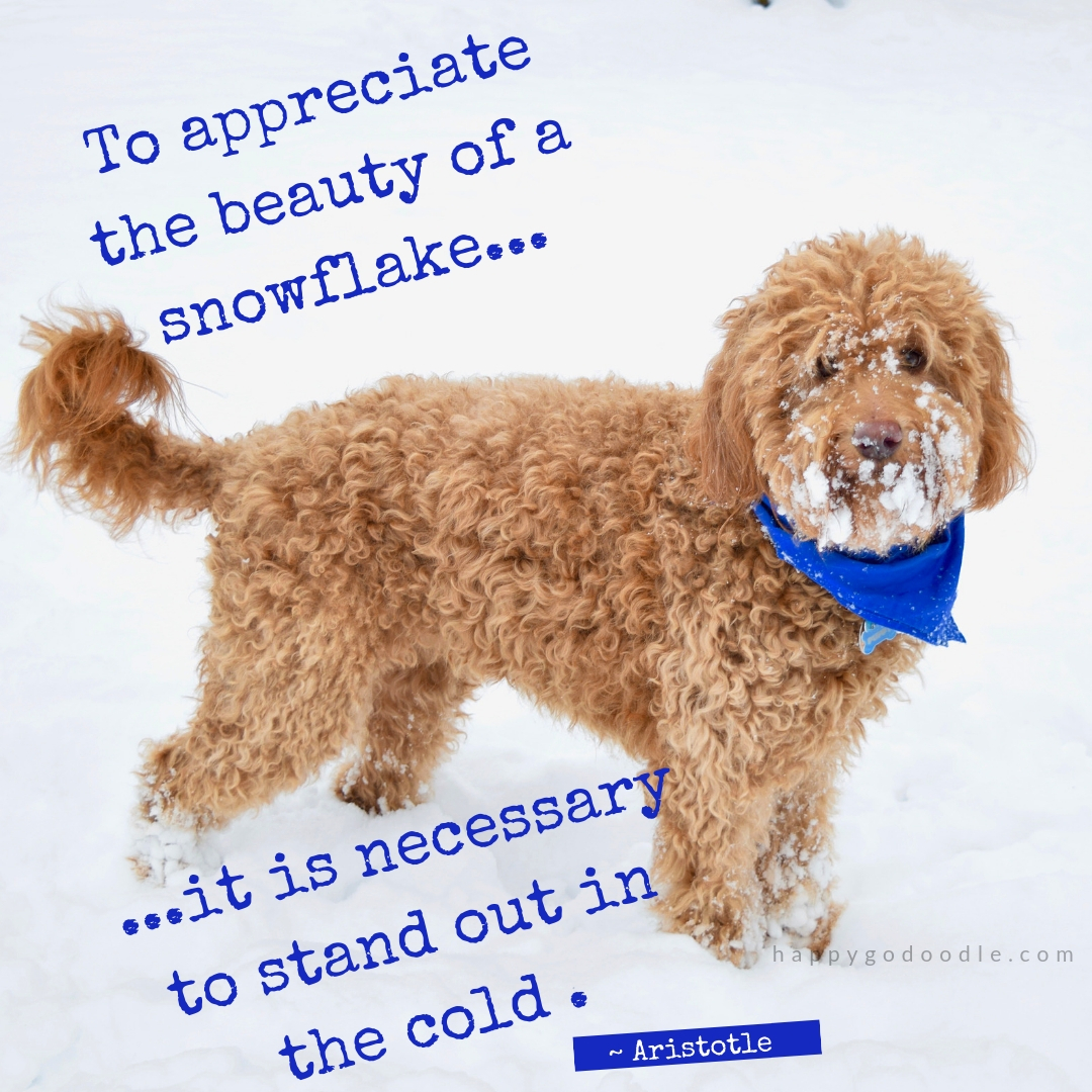 These 10 Feel-Good Quotes About Winter Along with a Dog\'s ...