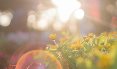 beautiful-blur-bokeh-917076