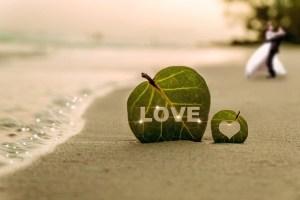 coast-leaf-water-wave-sea-beach-sha-couples