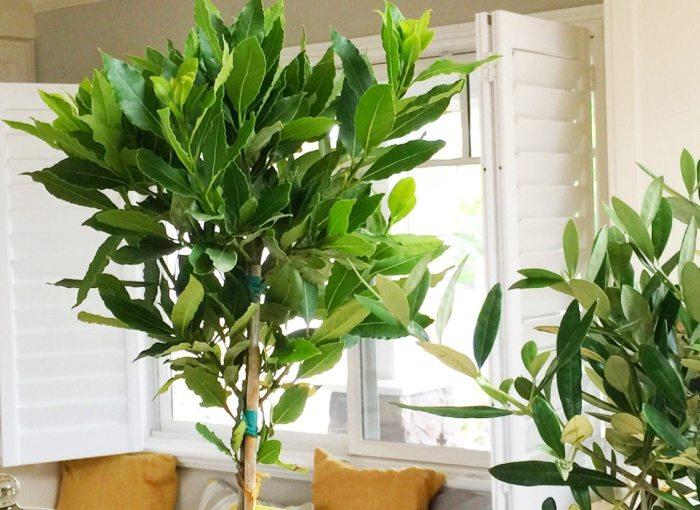 monrovia plants close up