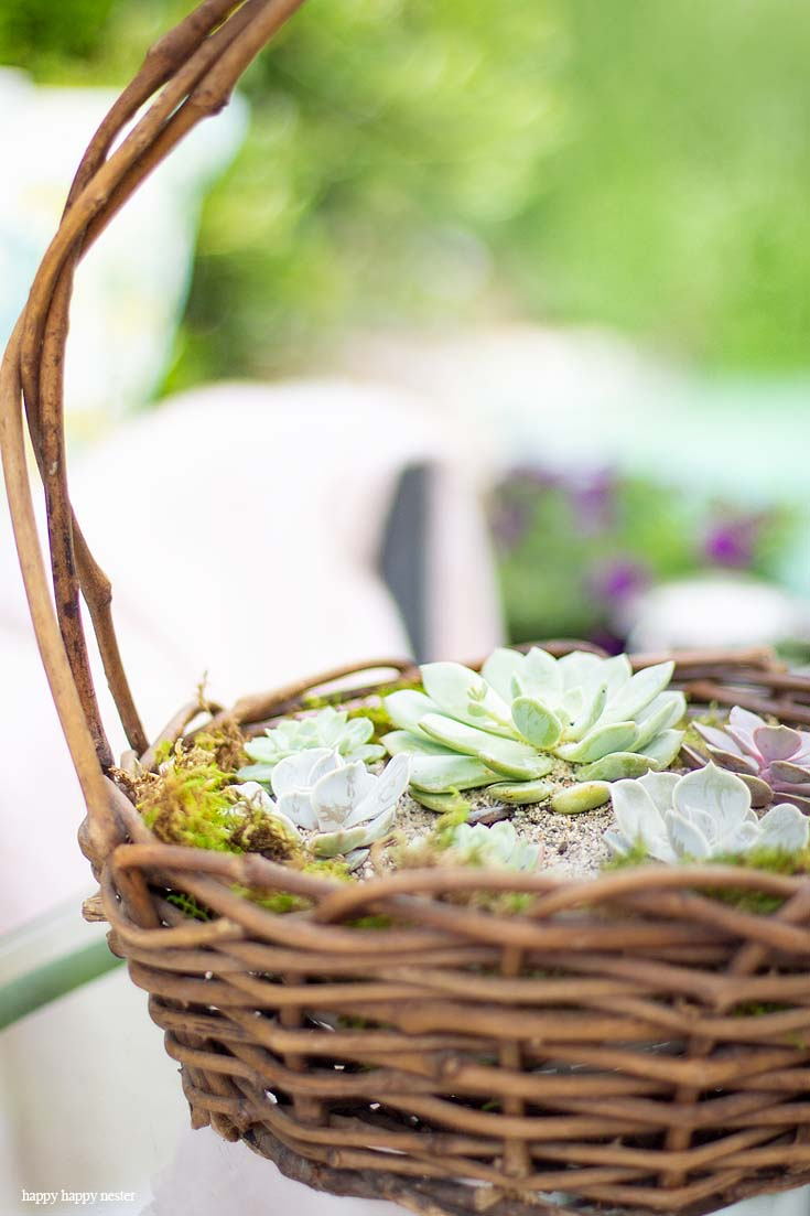 Check Out My Container Gardening Ideas For Your Summer Planning Its Not Too Late To