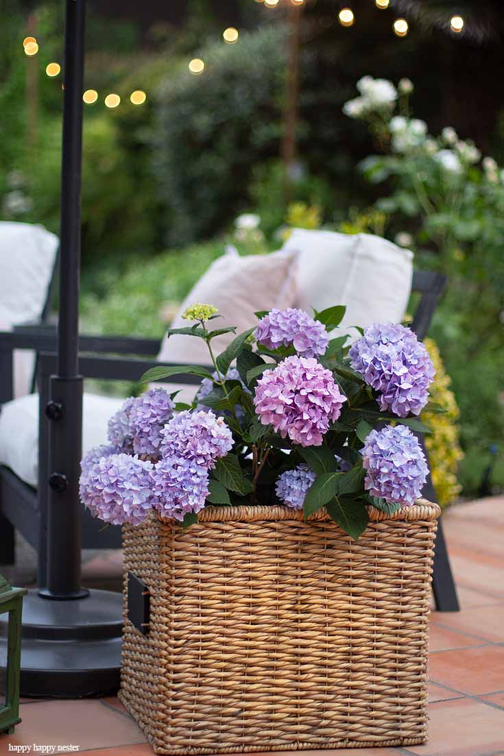 Check out my Container Gardening Ideas for your summer planning. It's not too late to get your flower pots started for summer. Spring is the perfect time to get your garden organized and let us help you!#gardening #flowers #garden