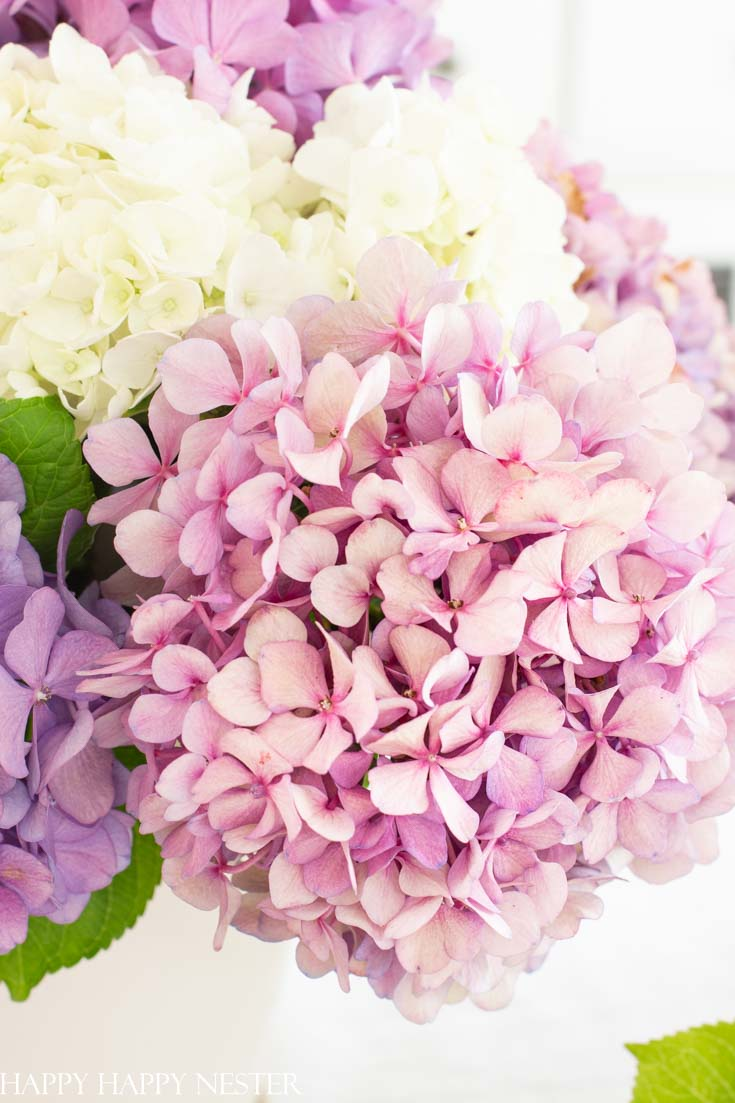 Summer Table Decor with Hydrangeas is an easy and informative post on how to decorate your table. Also, the post covers a little information about growing hydrangeas. #summertables #tabledecor #hydrangeas